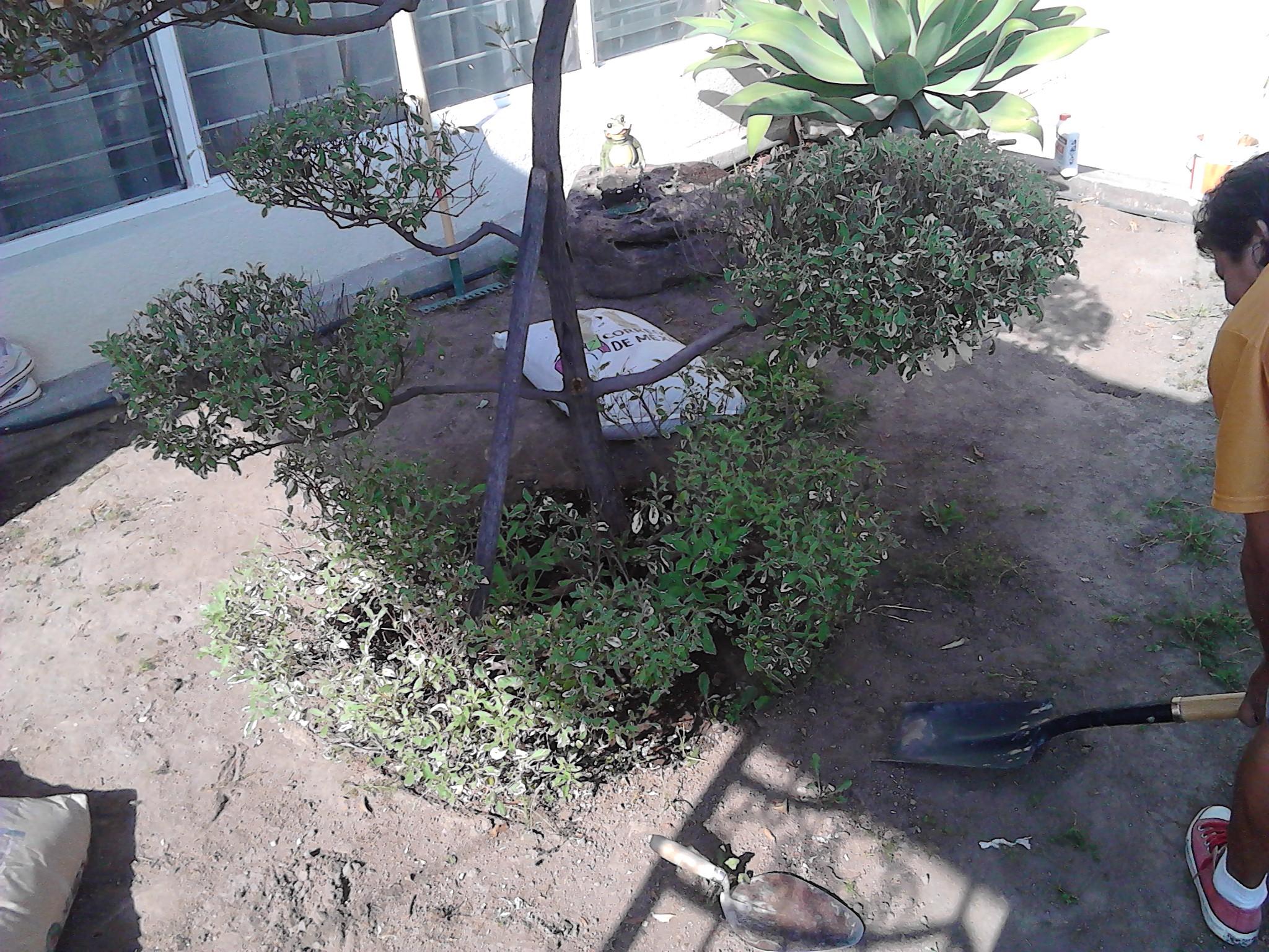 2.- Preparar el terreno para la instalación del pasto.